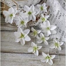 Набор цветов Pastel Flowers Гортензии Дуболистные, белые