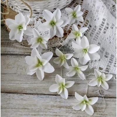 Набор цветов Гортензии Дуболистные, белые